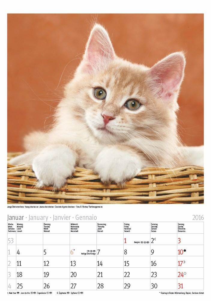 Großer farbiger Katze 2016 23,5×33,5.indd
