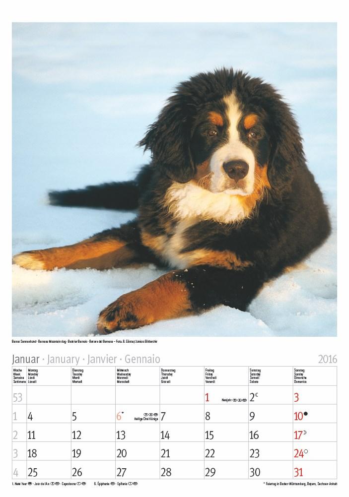 Großer farbiger Hunde 2016.indd