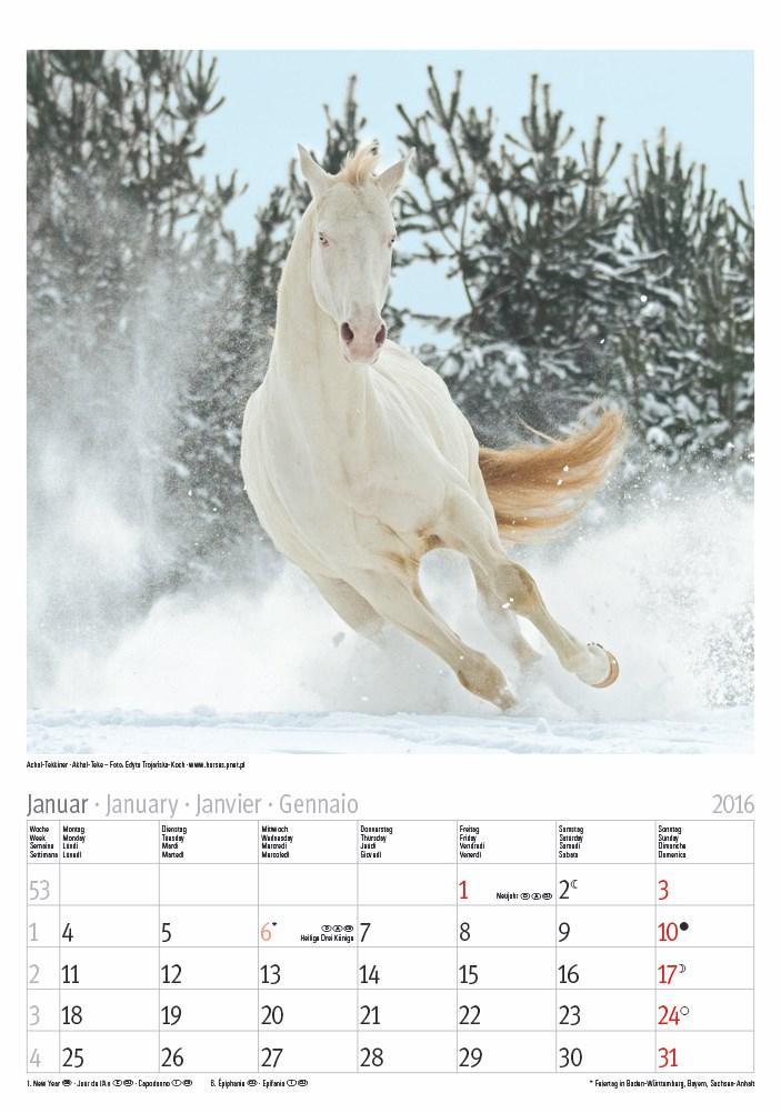 Großer farbiger Pferde 2016.indd