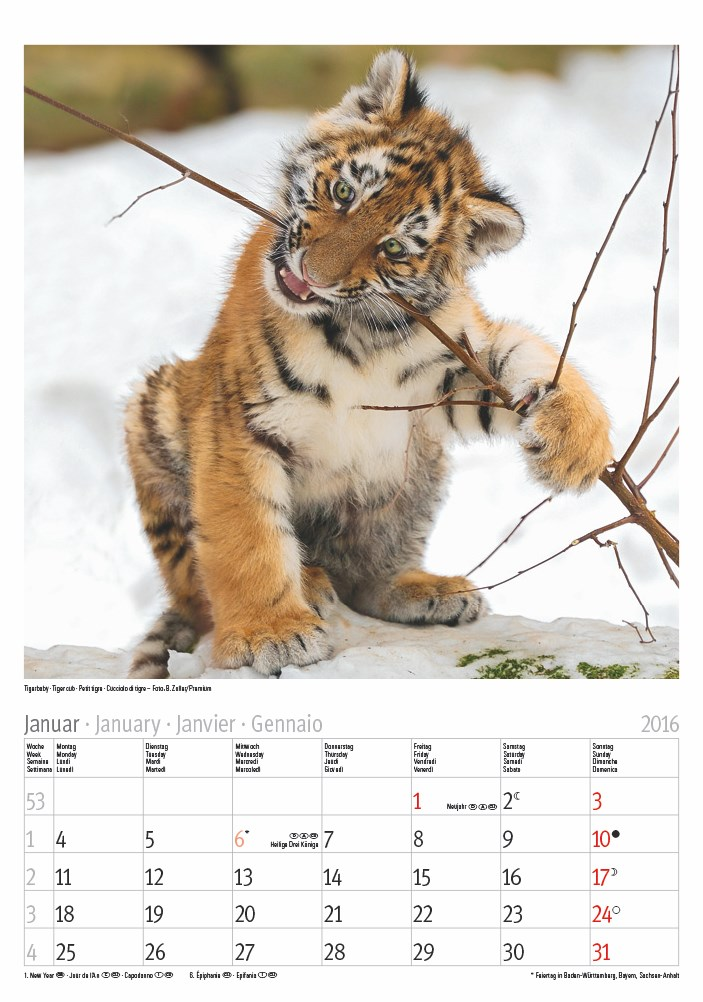 Tierkinder 2016 23,5×33,5.indd